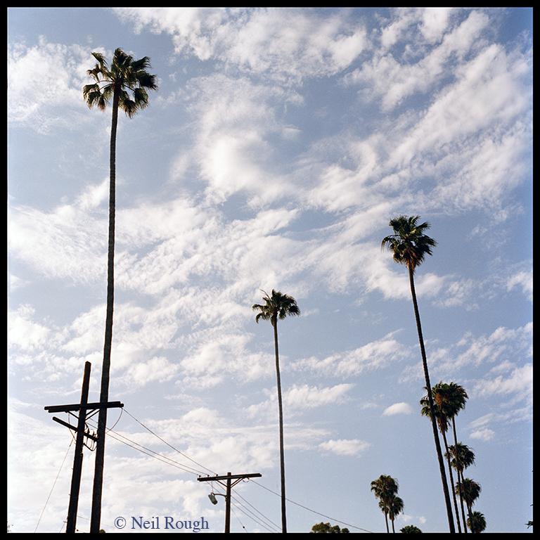 01. CA Hollywood Palms.jpg