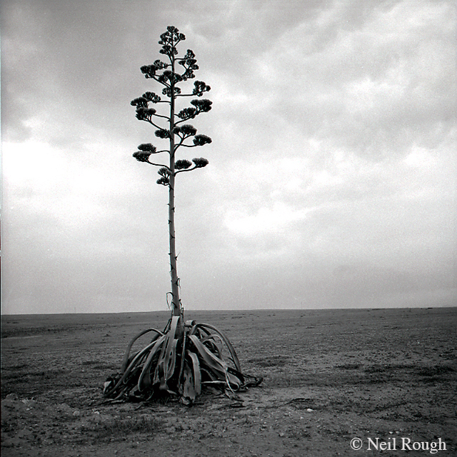 2.Tunisia Tree.jpg