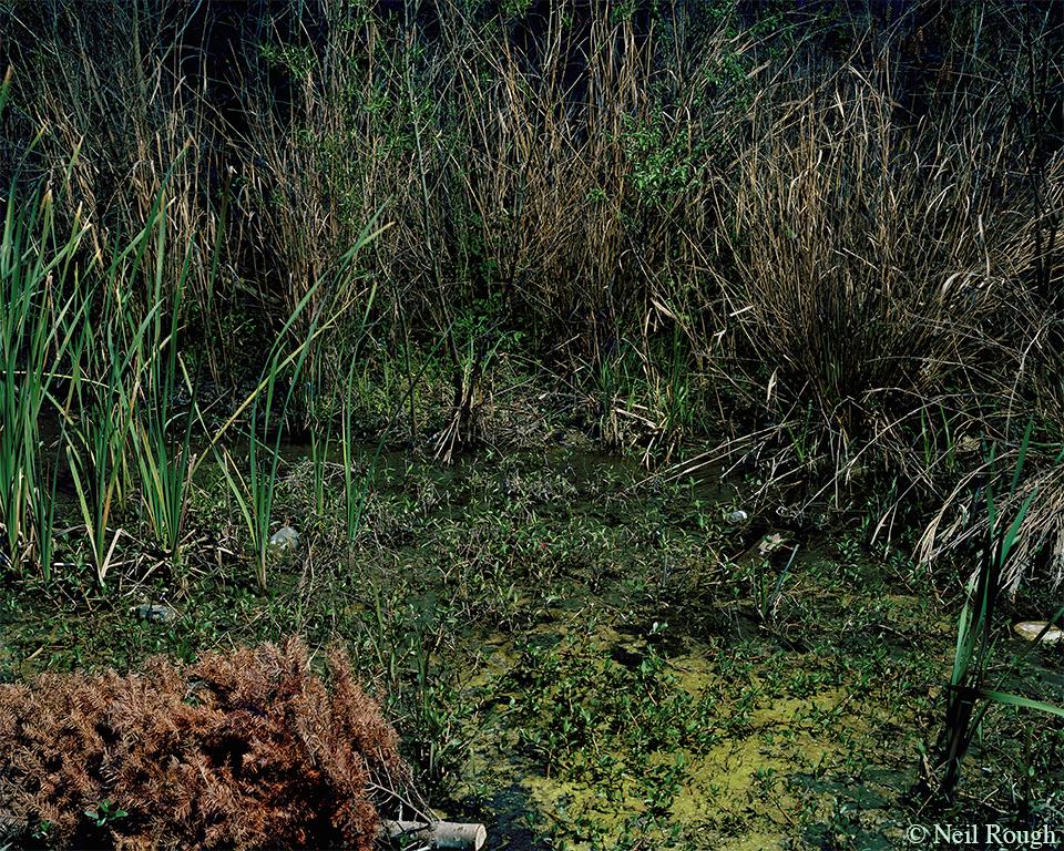 BF 2014 NOLA Tree Swamp.jpg