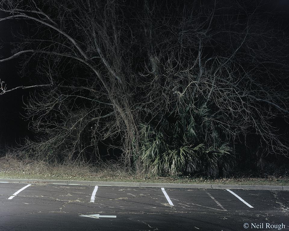 Myrtle Beach Parking Lot Tree 2015.jpg