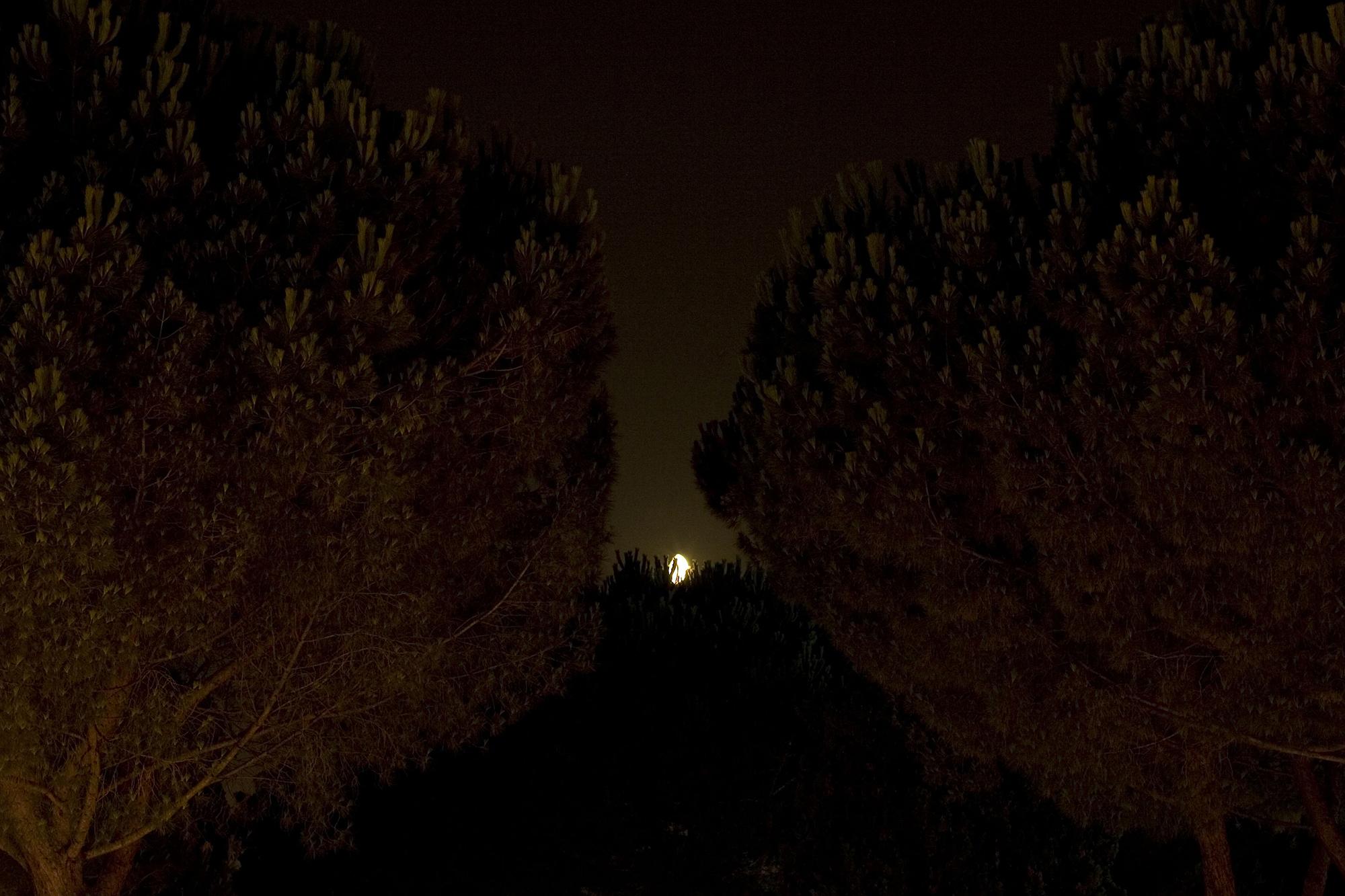 Sara Palmieri-Between Two Lungs-15.jpg
