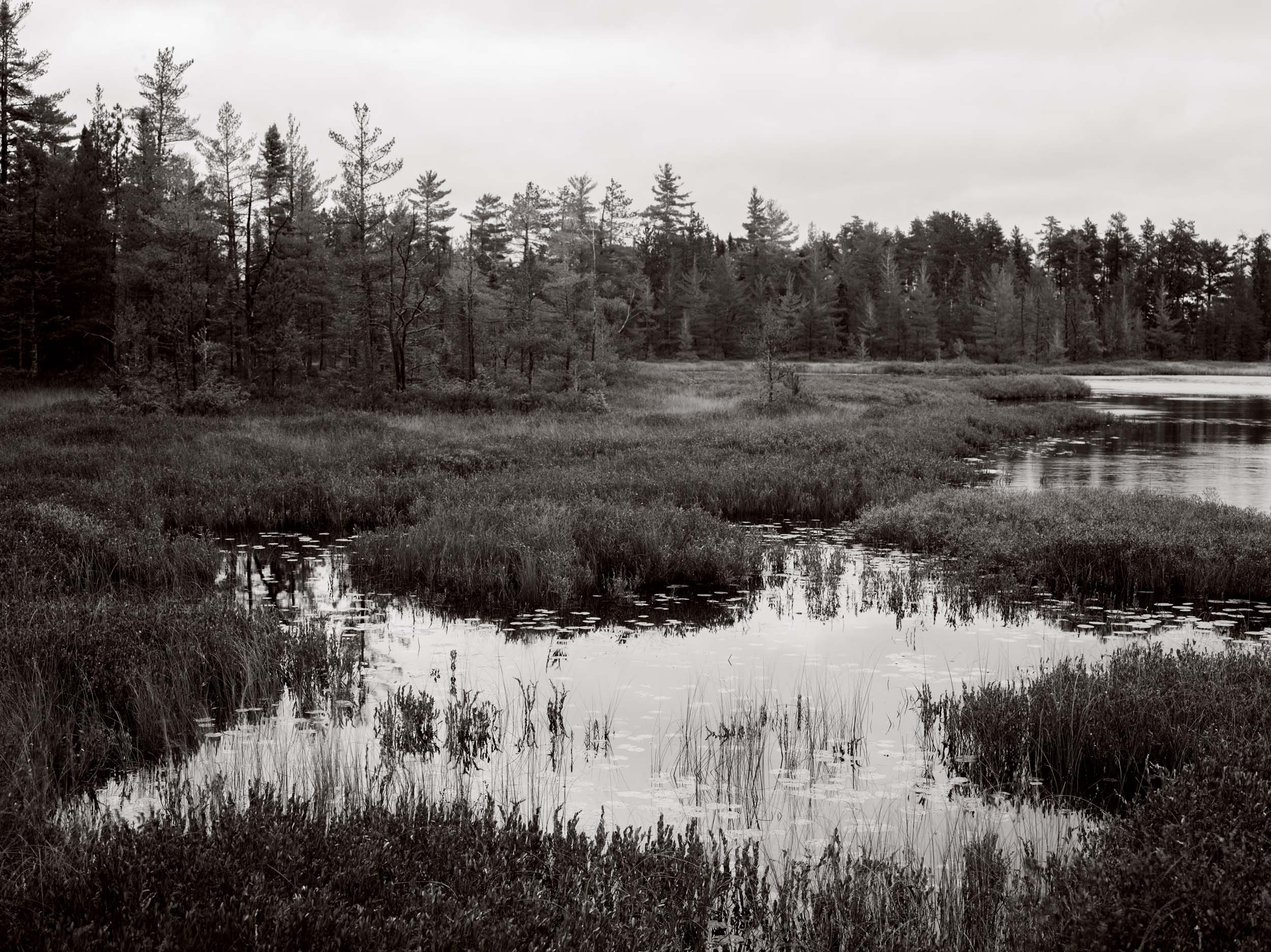 THE BOG - Tahquemanom Falls State Park. Marshy, pikey, boggy. The swamps of Tahquemanom are beautiful, almost pastoral, in a way - manicured by the seasons. Michigan Landscape Photography.