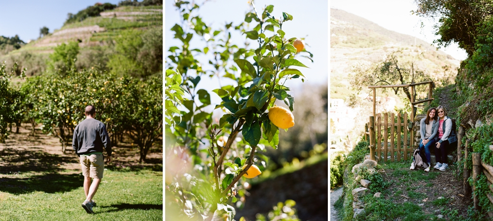 Italian Lemon Grove