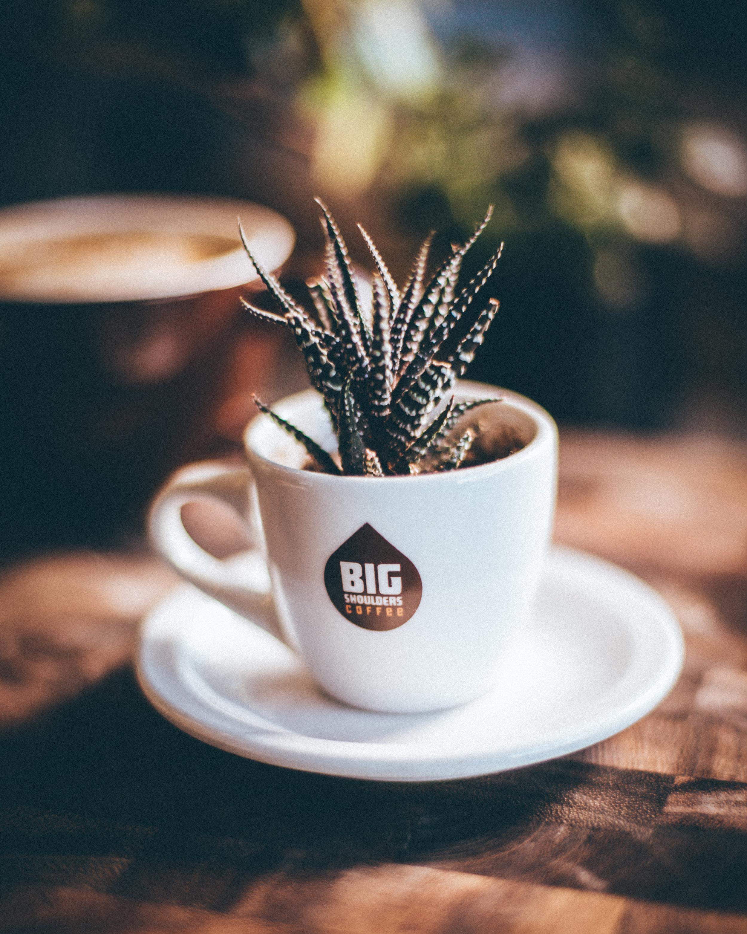 BIG SHOULDERS COFFEE-181 (1).jpg
