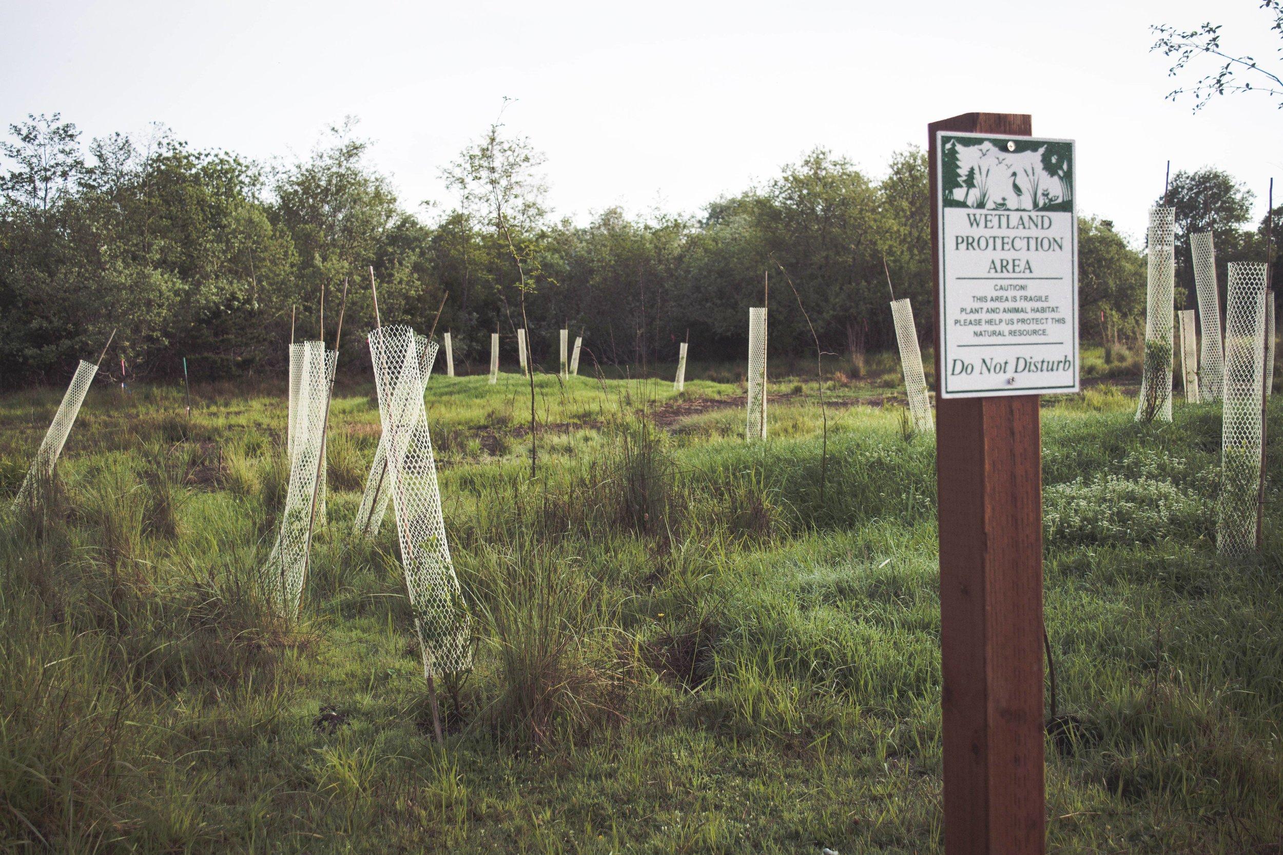 environmental policies