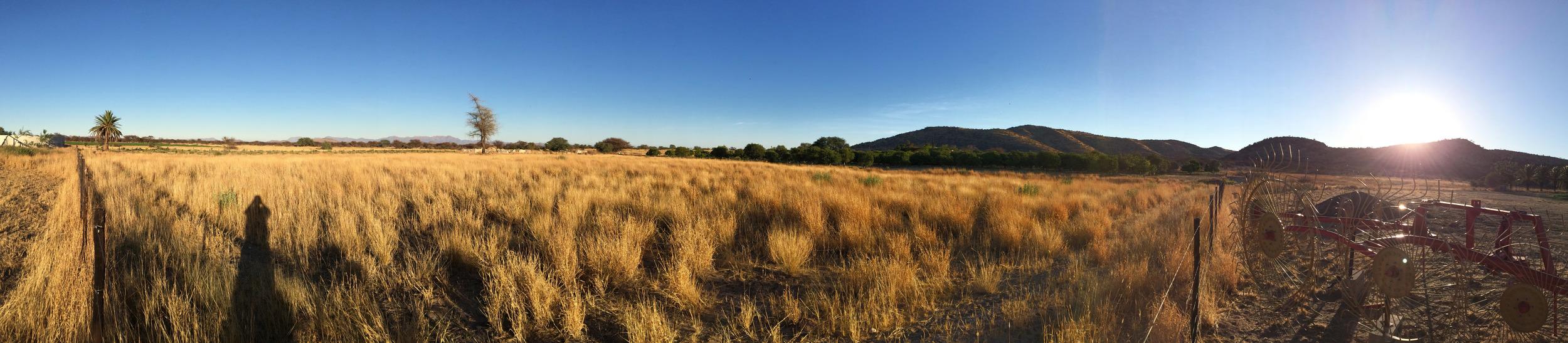 Field trial field