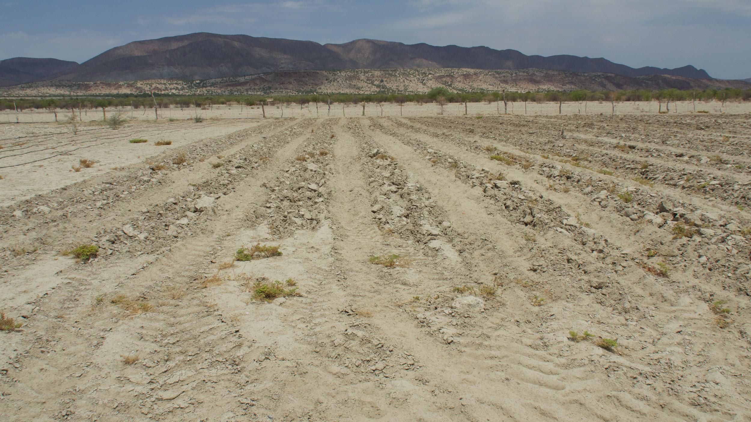 Bennie's Warmquelle plot for biochar field trials
