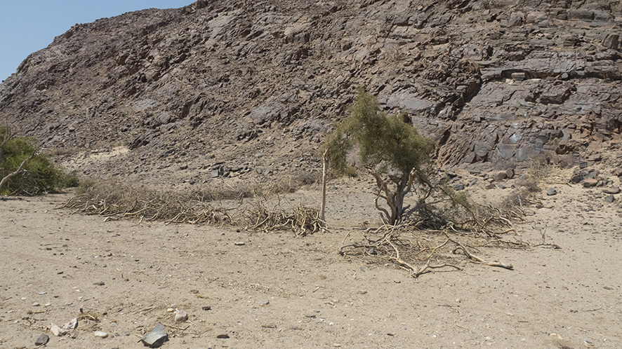 An old Himba cattle and goat kraal. A source of dung for the proposed garden