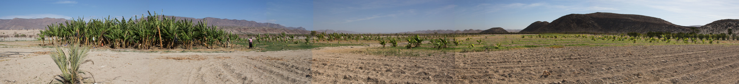 Bennie's land at Warmquelle. Banana plants are on the left.