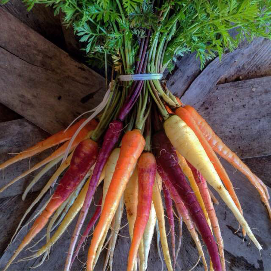 gallery_carrots.jpg