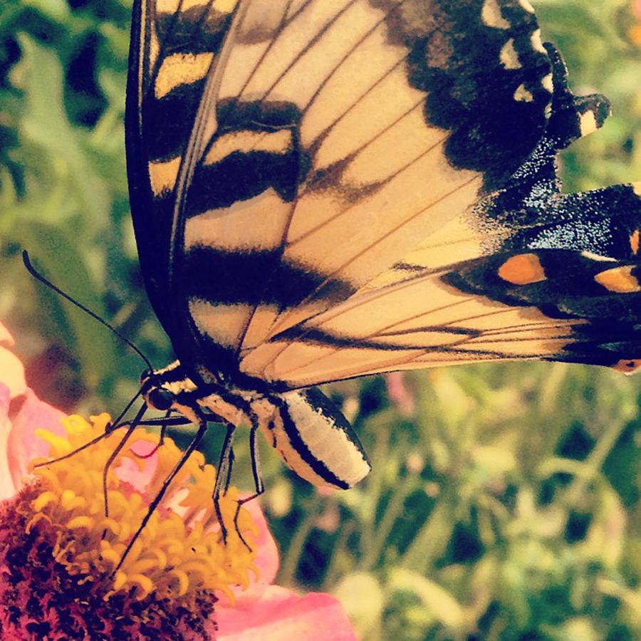 gallery_butterfly.jpg