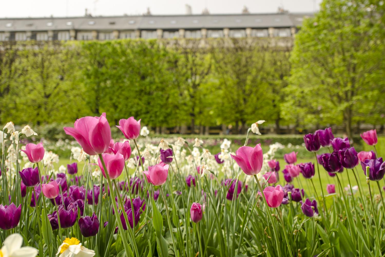 Jardin du Palais Royal - Photography : Alexander J.E. Bradley - Nikon D7000 -Nikkor 14-24mm f/2.8 @ 24mm - F/2.8 - 1/800 - ISO:100