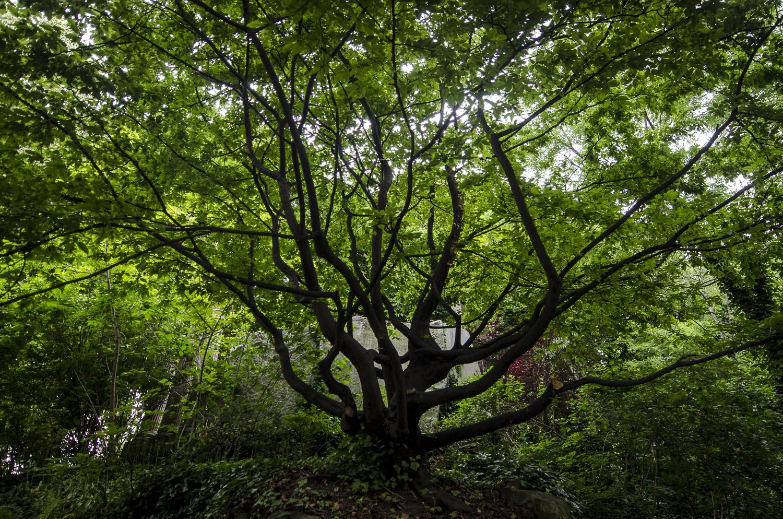 Le jardin de la Nouvelle-France - PHOTOGRAPHY : ALEXANDER J.E. BRADLEY - NIKON D7000 - NIKKOR 14-24MM F/2.8 @ 14mm - F/2.8 - 1/125 - ISO:400