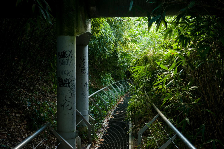 Jardin des bambous - PHOTOGRAPHY : William Lounsbury - NIKON D800 - NIKKOR 24-70MM F/2.8 @ 38mm - F/5.6 - 1/30 - ISO:400