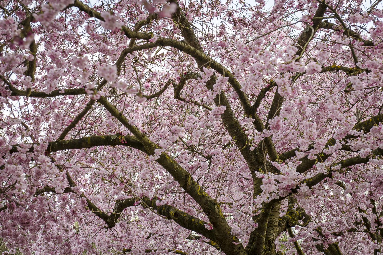 Giverny - Photo: Alexander J.E. Bradley - Nikon D7000 - 24-70mm f/2.8 @ 58mm - f/5 - 1/125 -ISO 100