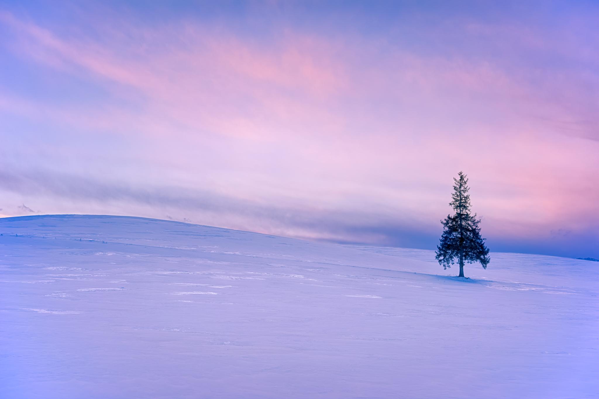 "The ""christmas tree"" in Biei"