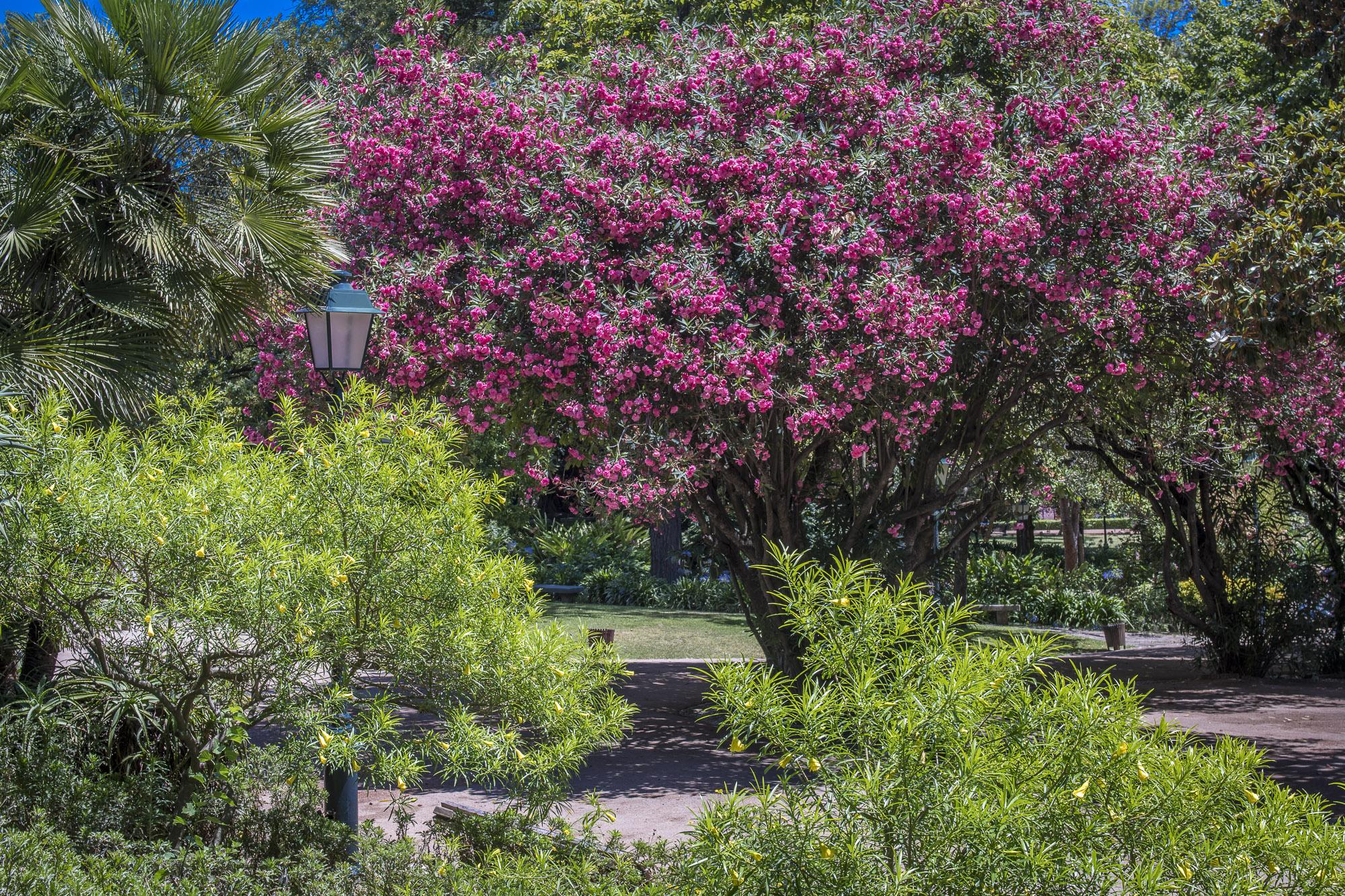 Jardim da Estrela  PHOTOGRAPHY: ALEXANDER J.E. BRADLEY •NIKON D500 • AF-S NIKKOR 24-70mm f/2.8G ED • 35mm • F/8 •1/200 •ISO 100