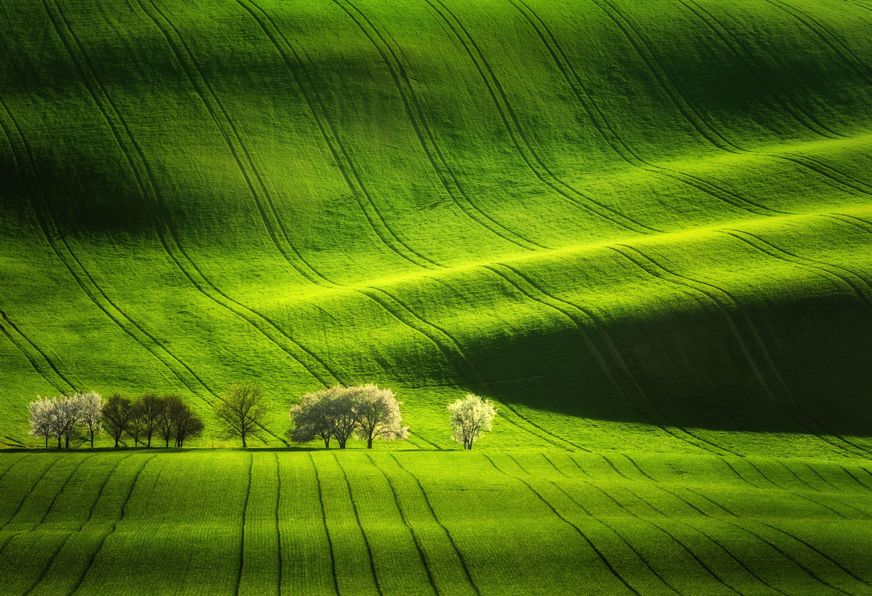 moravian tuscany fields  Photography: Martin Bisof