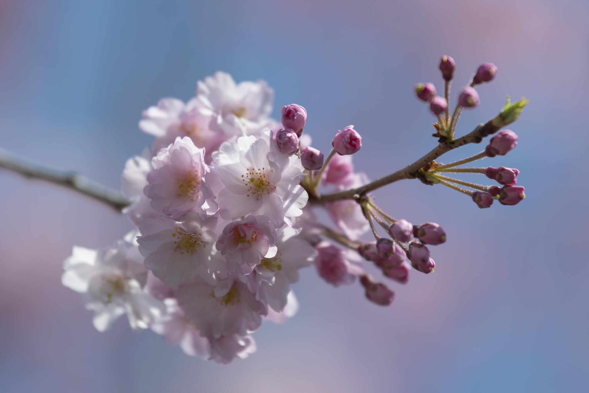 Meiji Jingu Gaien, Tokyo  Photography: Alexander J.E. Bradley • Nikon D500 • AF-S NIKKOR 70-200mm Ƒ/2.8E FL ED VR @ 200MM • Ƒ/2.8 • 1/2000 • ISO 100