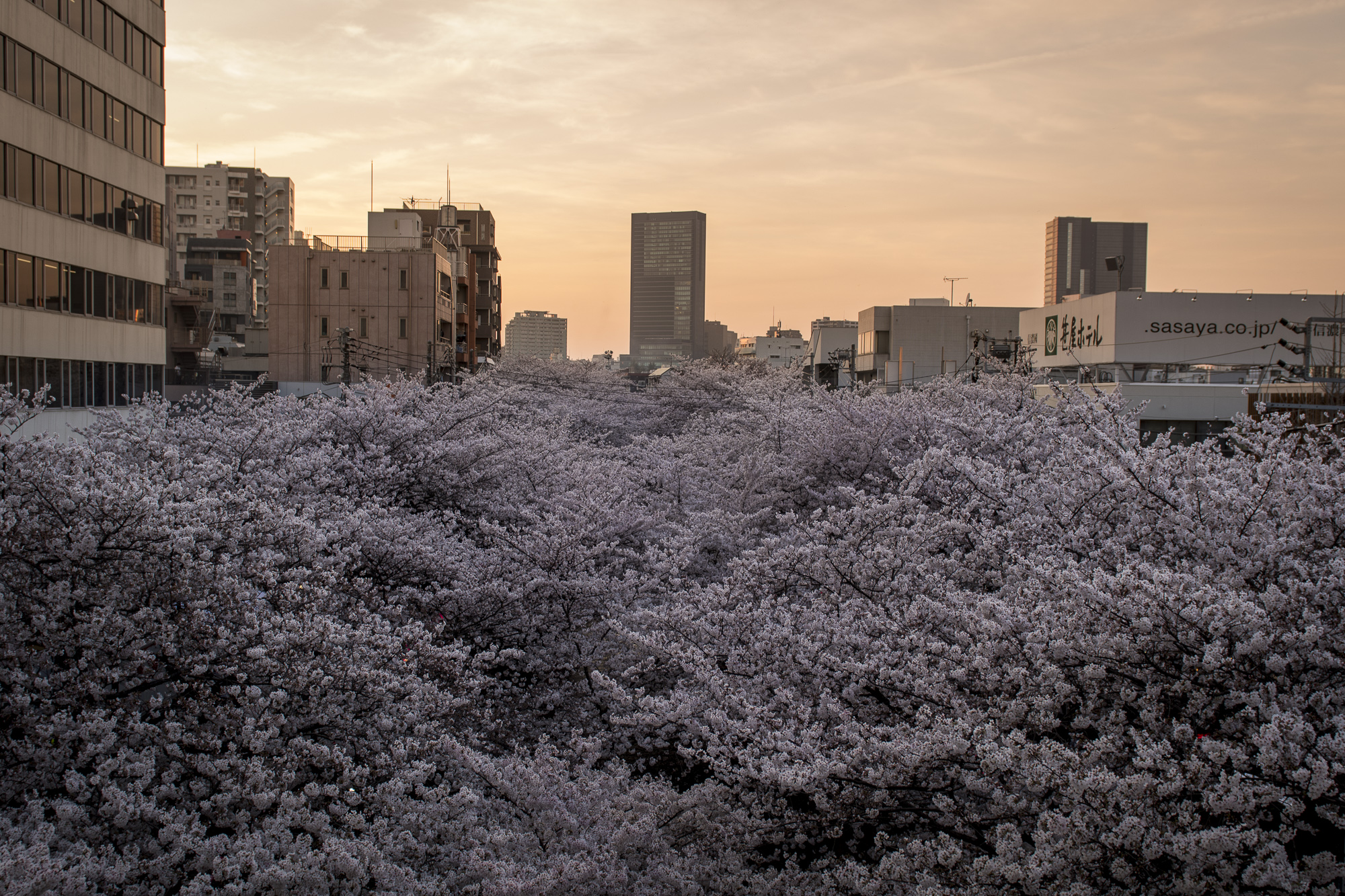 Naka-meguro, Tokyo  PHOTOGRAPHY: Alexander J.E. Bradley • NIKON D500 • AF-S NIKKOR 24-70MM ƒ/2.8G ED @ 24MM • ƒ/4 • 1/125 • ISO 100