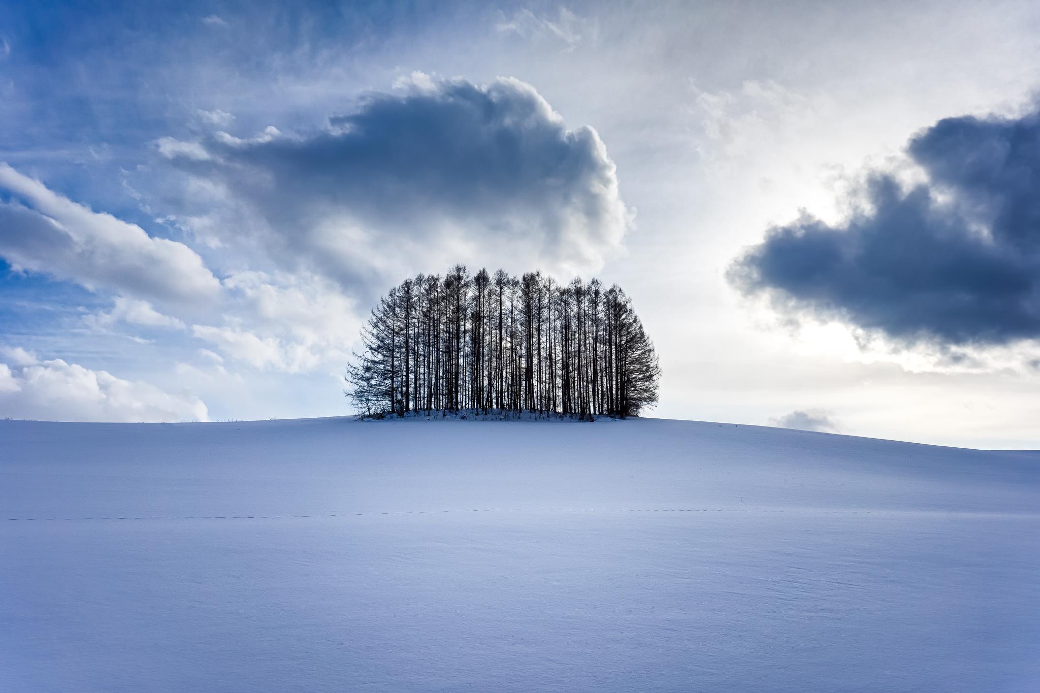 Mild Seven Tree, Biei
