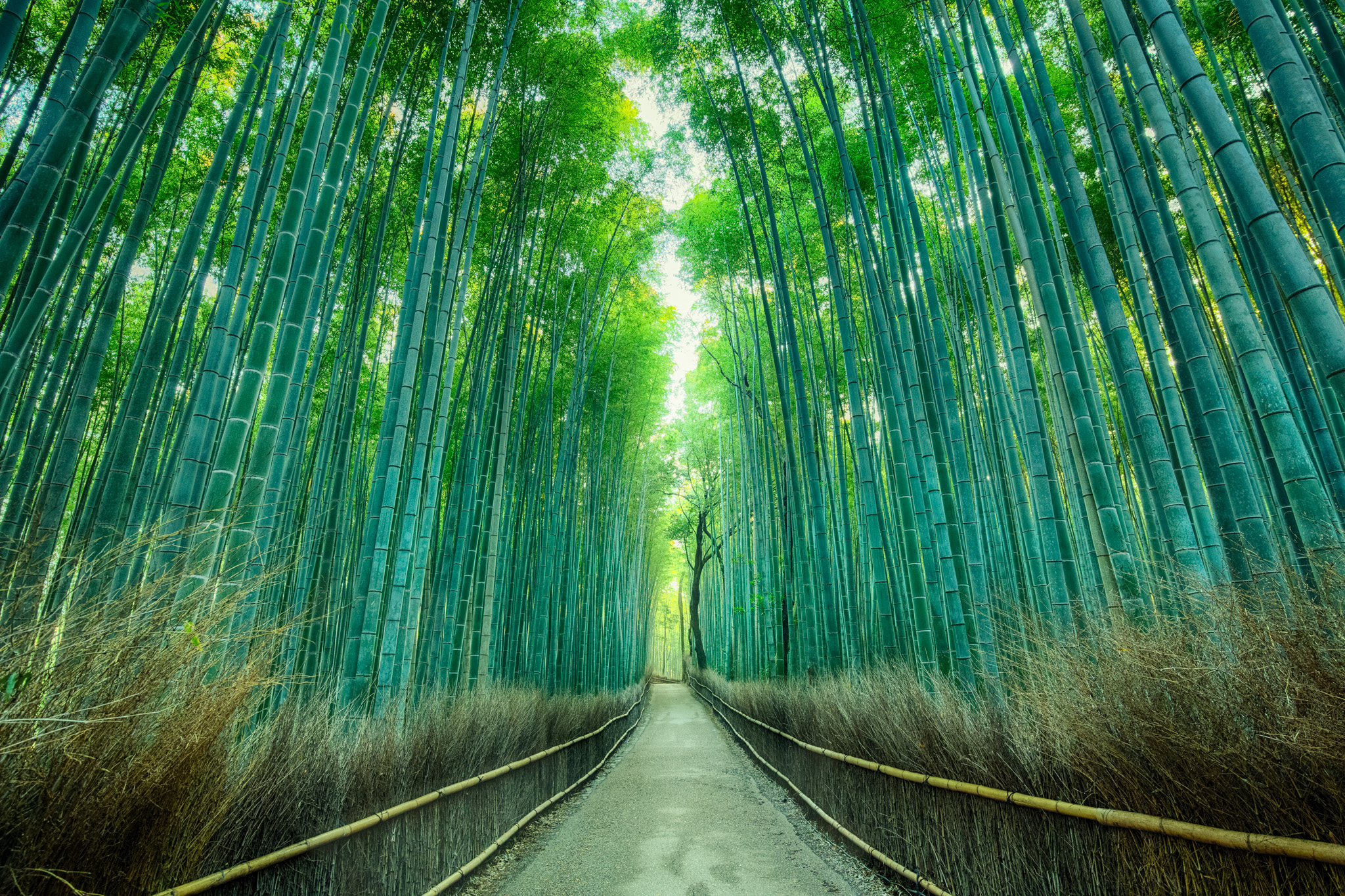 The Arashiyama Bamboo Forest  PHOTOGRAPHY: Andy Yee • CANON 5D MkIII • Tonika 16-28mm Ƒ/2.8 @ 16MM Ƒ/9 • HDR