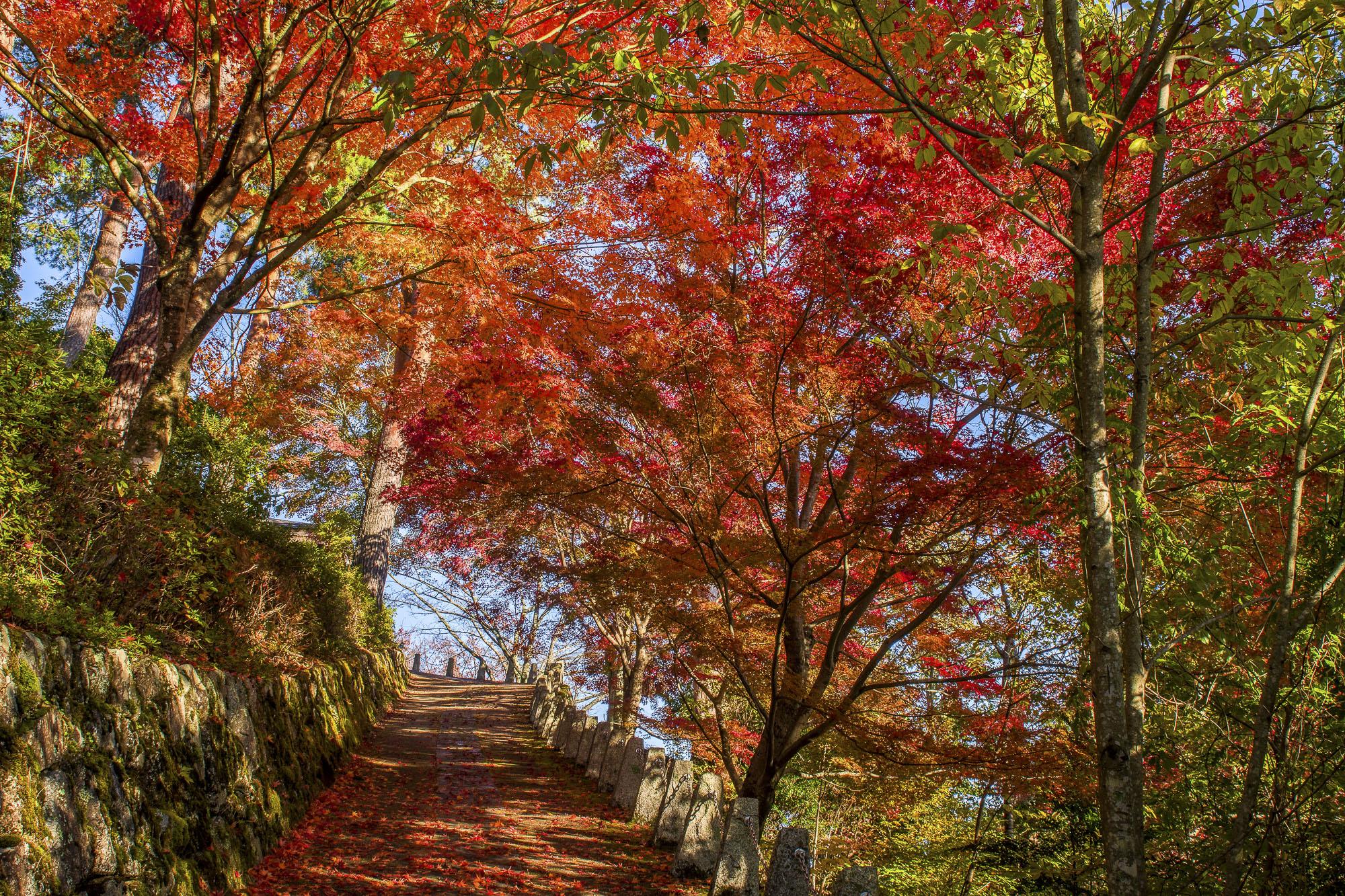 Mount Yoshino