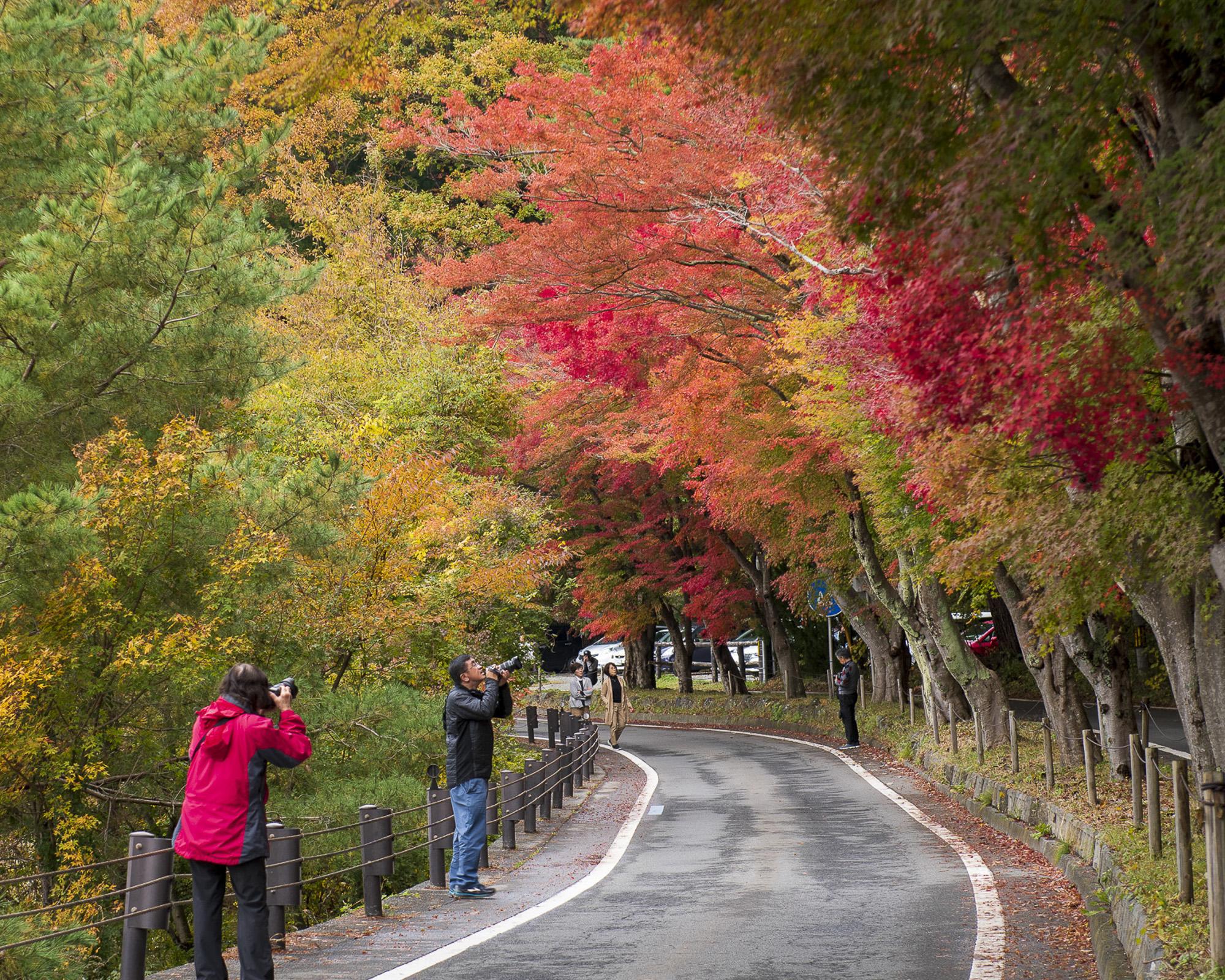 japan-autumn-040-aperture-tours.jpg