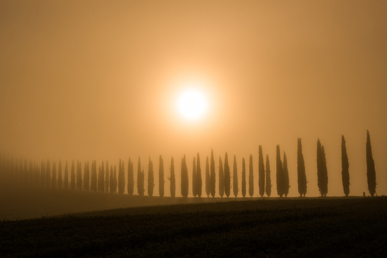 Copia di Cypress trees in a foggy morning.jpg