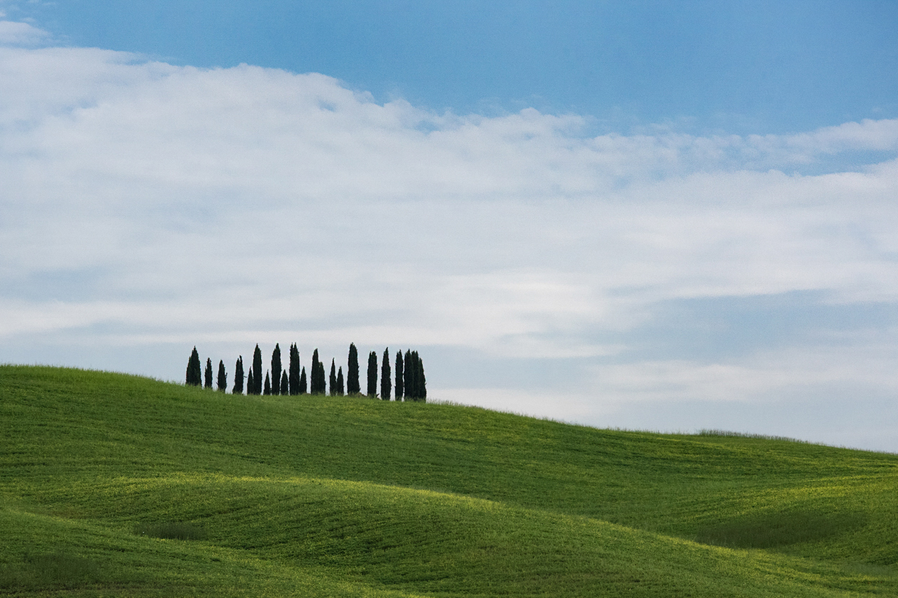 Copia di Cypress trees in San Quirico .jpg