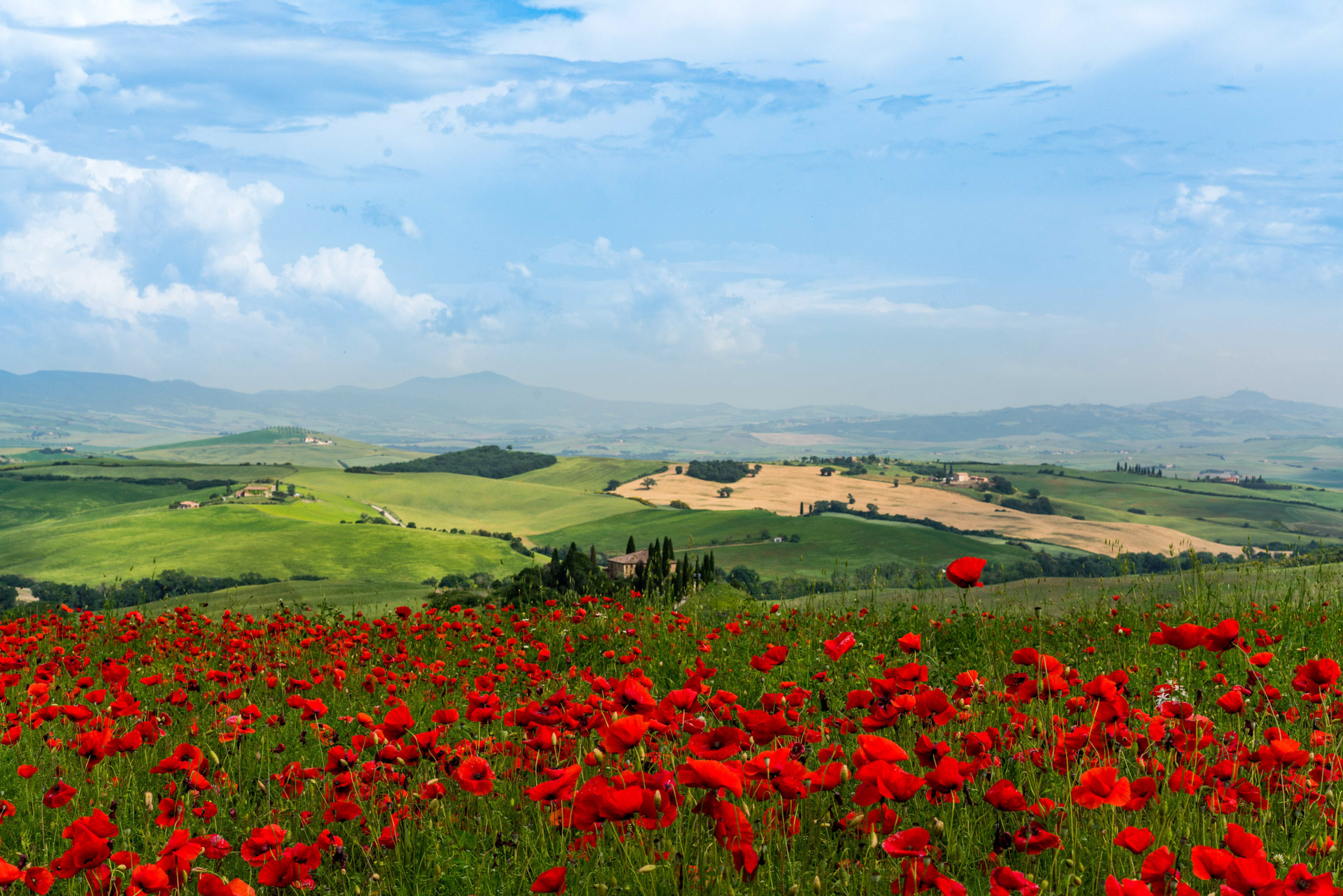 Copia di Red poppies overlooking Podere Belvedere.jpg