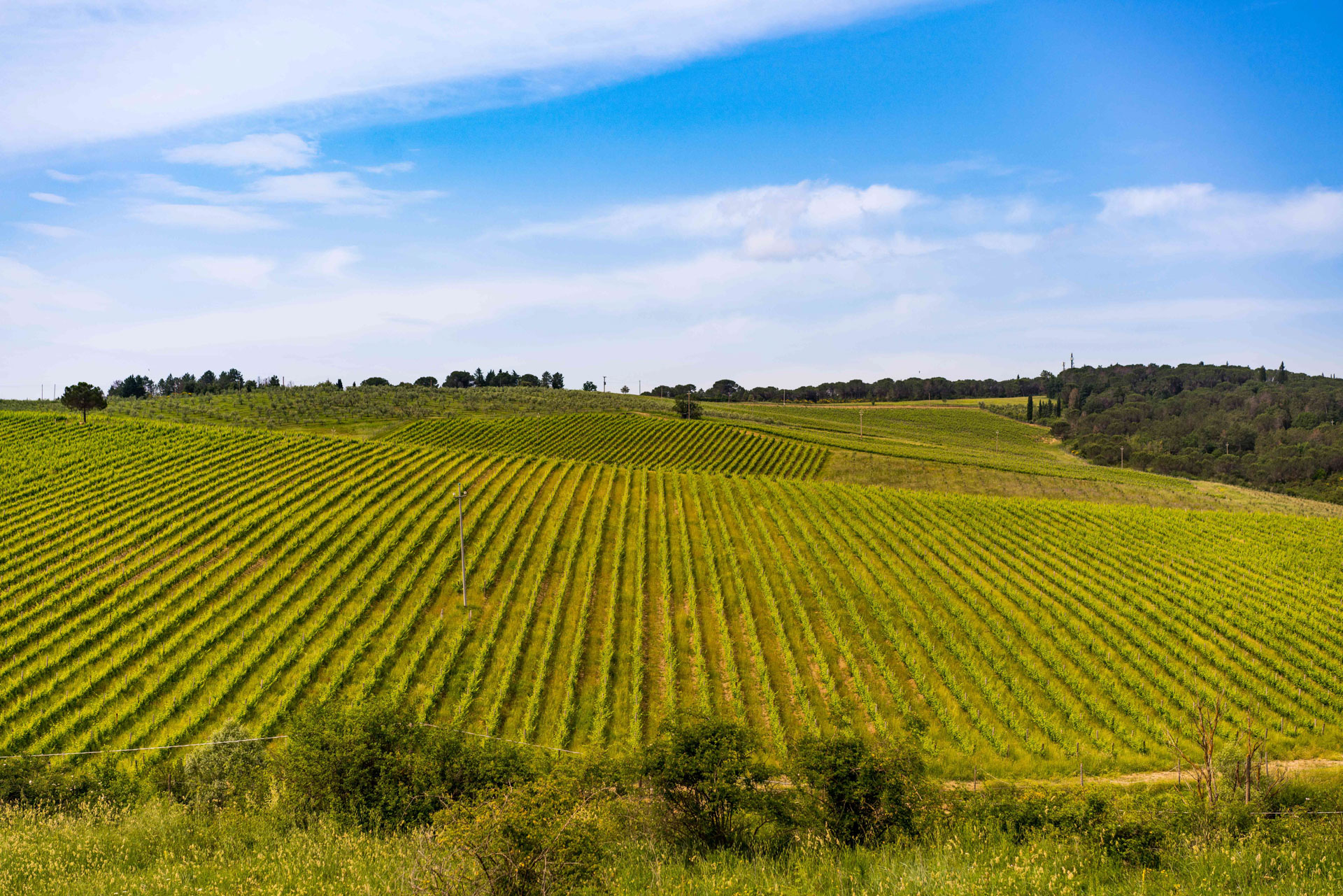 Copia di Strada in Chianti.jpg