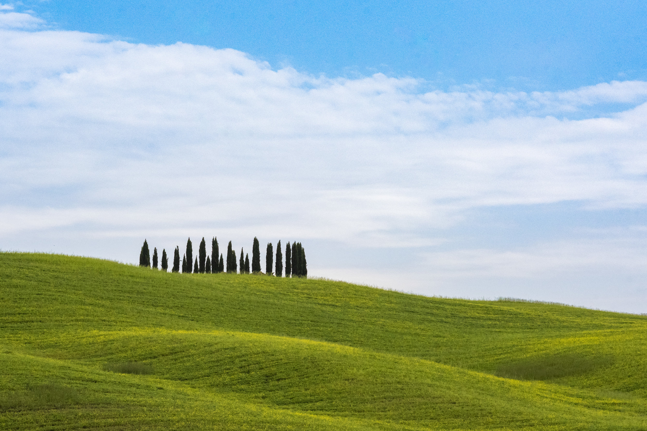 Cypress trees in San Quirico