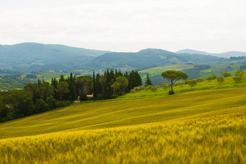 Strada in Chianti  PHOTO: ANNA VOLPI • NIKON D750 • 24-70mm Ƒ/2.8 @ 62mm • Ƒ/6.3 • 1/1250 • ISO 2000
