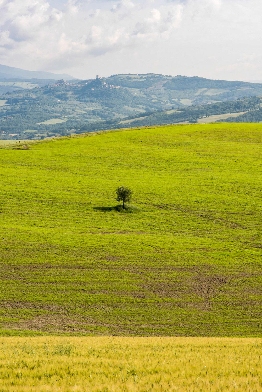 Near Cappella di Vitaleta, Val d'Orcia  PHOTO: ANNA VOLPI • NIKON D750 • 105mm Ƒ/2.8 @ Ƒ/11 • 1/320 • ISO 250