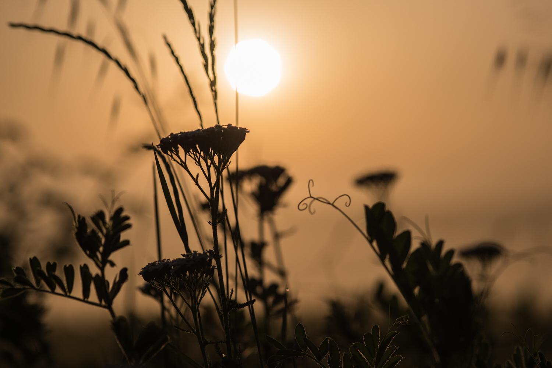 Wildflowers at sunset  PHOTO: ANNA VOLPI • NIKON D750 • 105mm Ƒ/2.8 @ Ƒ/5.6 • 1/4000 • ISO 100