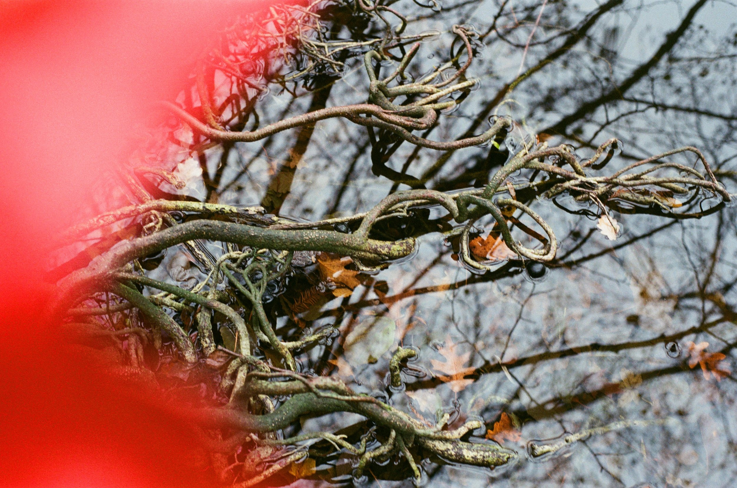 Paris winter branches_22.jpg