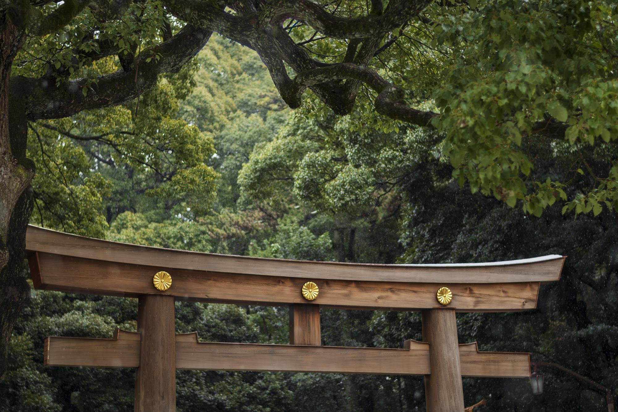 Meiji Shrine  PHOTOGRAPHY: ALEXANDER J.E. BRADLEY • NIKON D500 • AF-S Nikkor 50mm ƒ/1.8G @ Ƒ/8 • 1/200 • ISO 100