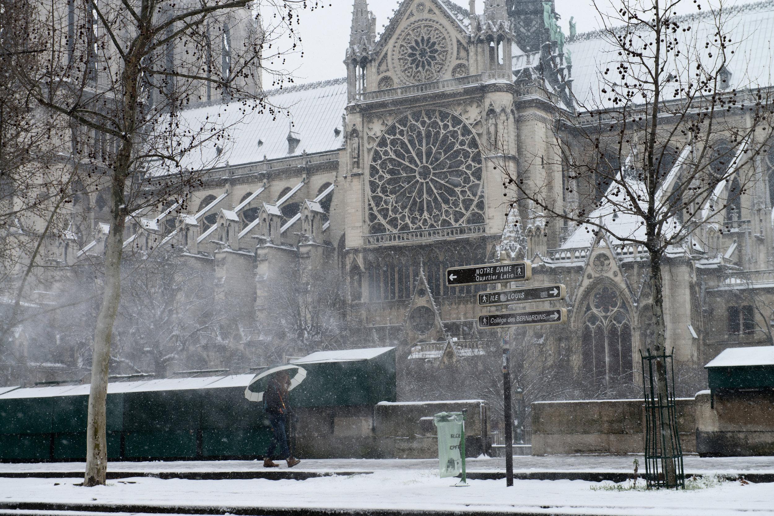Notre Dame  PHOTOGRAPHY: William Lounsbury • NIKON D800 • AF-S NIKKOR 14-24MM Ƒ/2.8G ED @ 70MM • Ƒ/8 • 1/400 • ISO 400