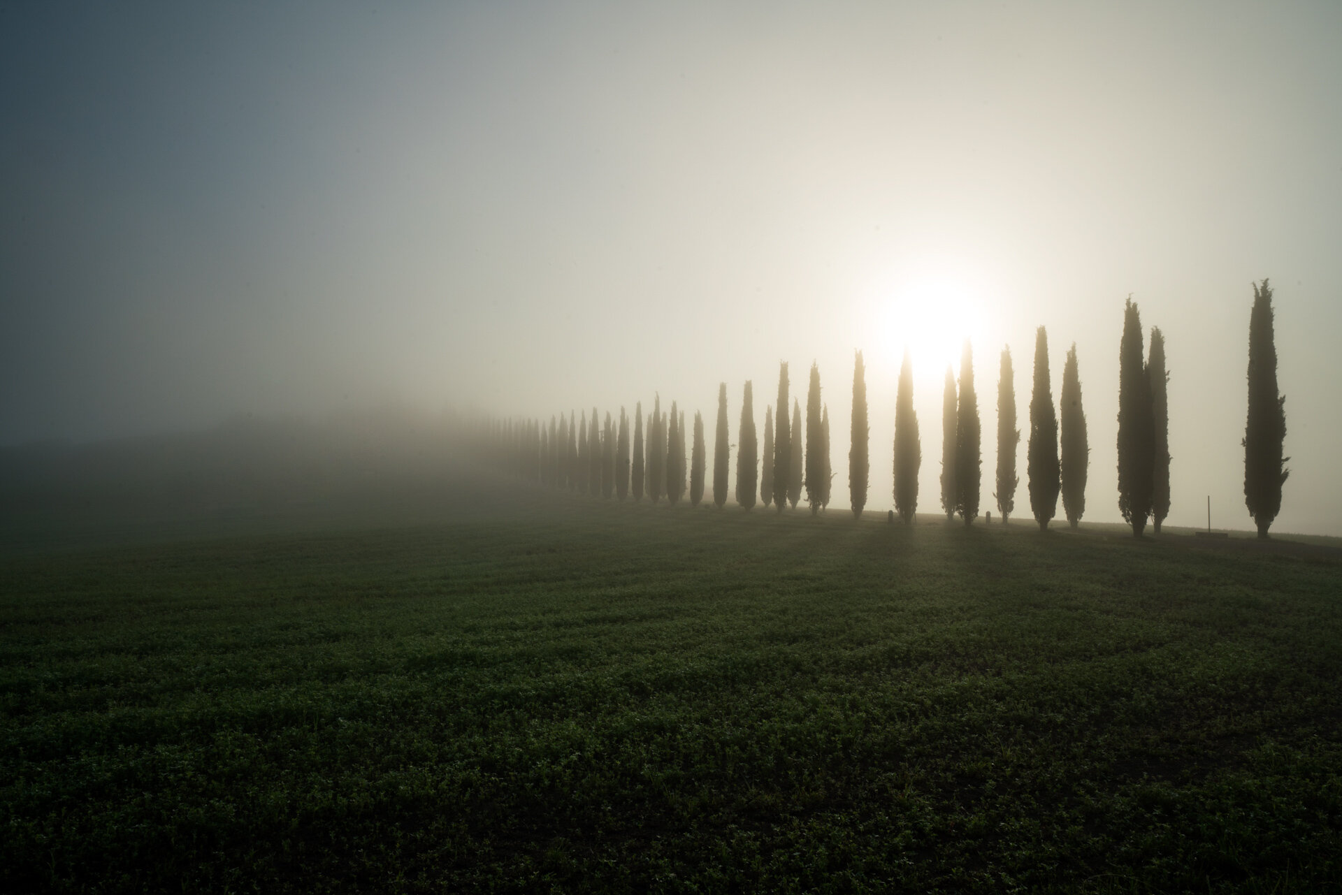 Cypress trees in a foggy morning in val d'Orcia  PHOTOGRAPHY: MIRKO FIN • Sony Alpha 7R MkIII • SONY FE 12-24MM Ƒ/4 G @ 24MM • Ƒ/20 • 1/80 sec • ISO 100