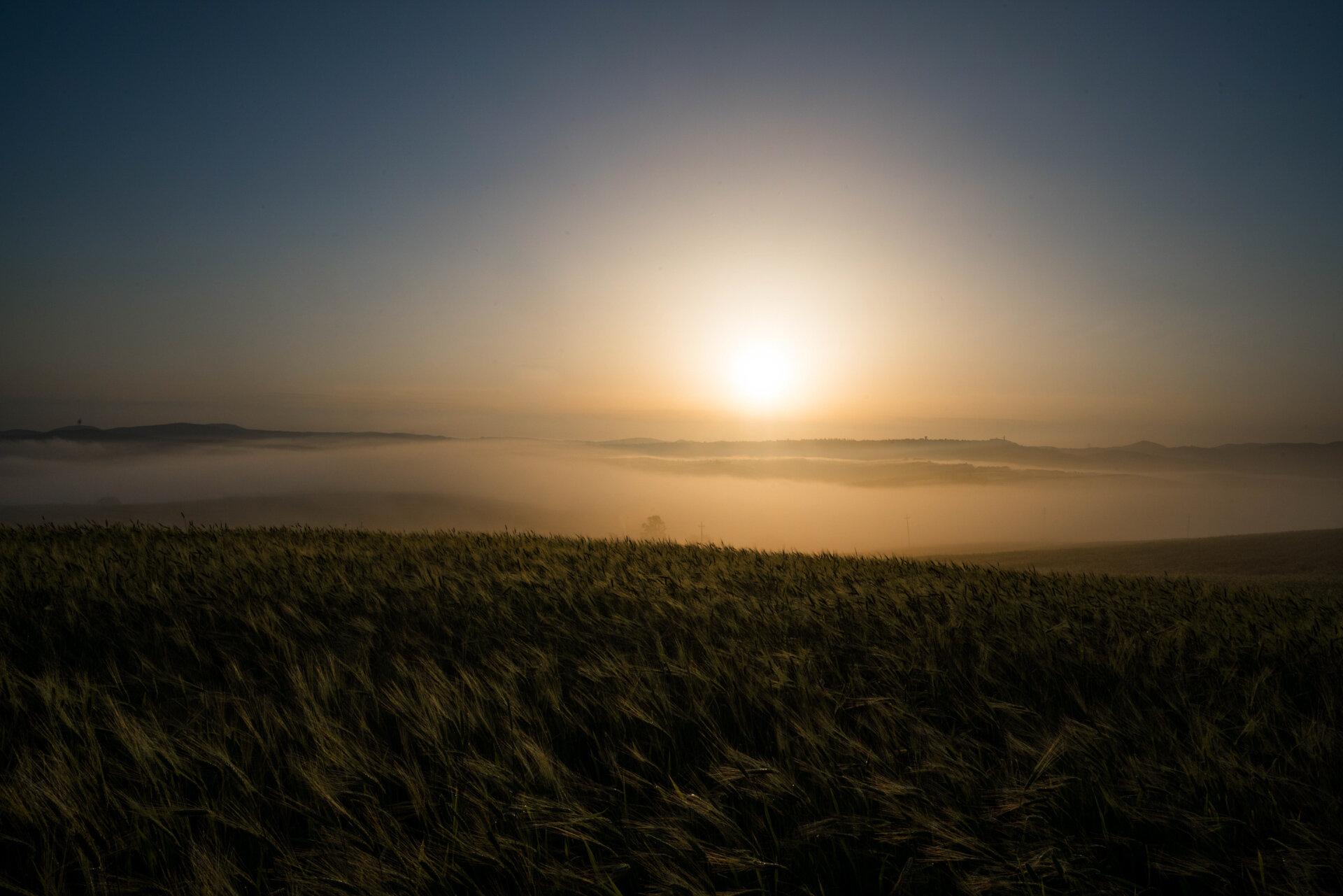 Field in a foggy morning  PHOTOGRAPHY: MIRKO FIN • Sony Alpha 7R MkIII • SONY FE 12-24MM Ƒ/4 G @ 24MM • Ƒ/22 • 1/100 sec • ISO 100