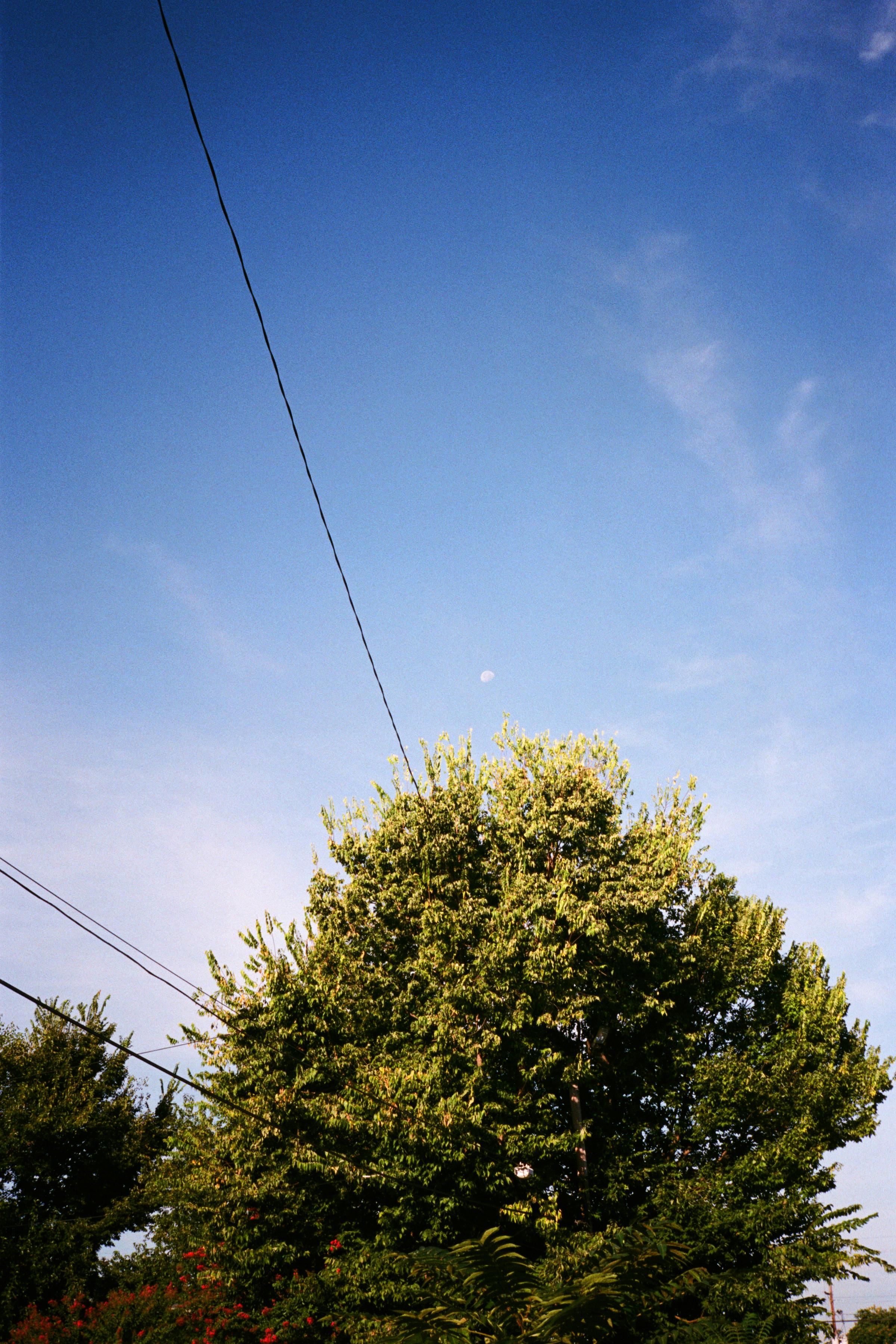 NI 25.jpg