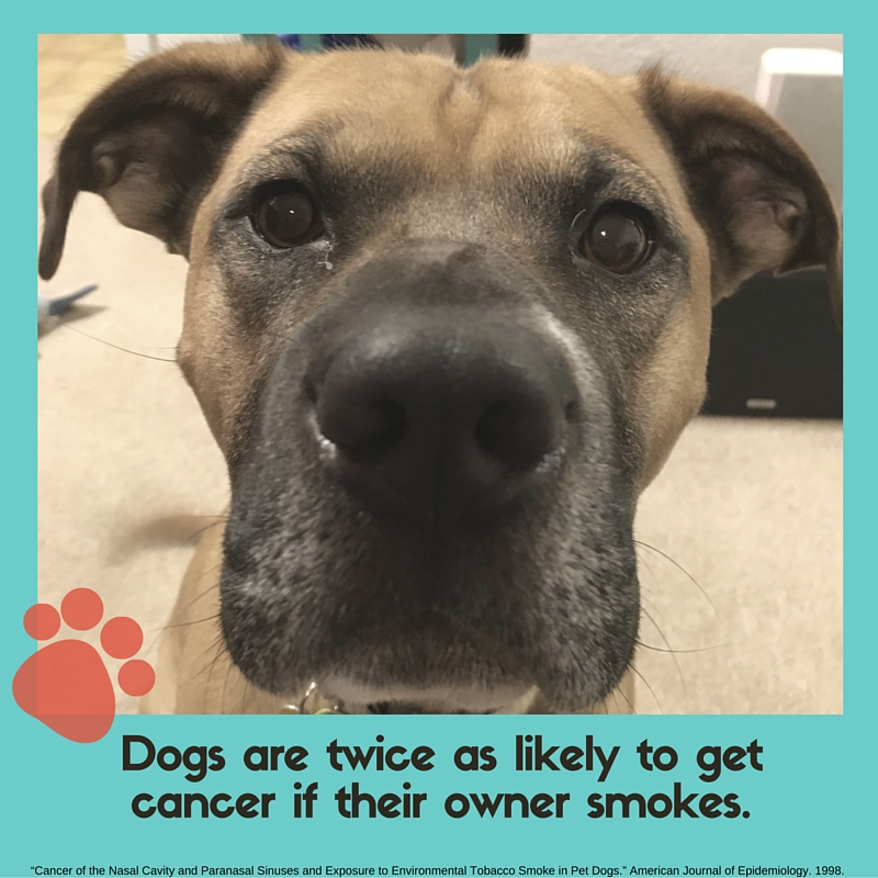 DOGS ARE TWICE AS LIKELY TO GET CANCER IF THEIR OWNER SMOKES..jpg
