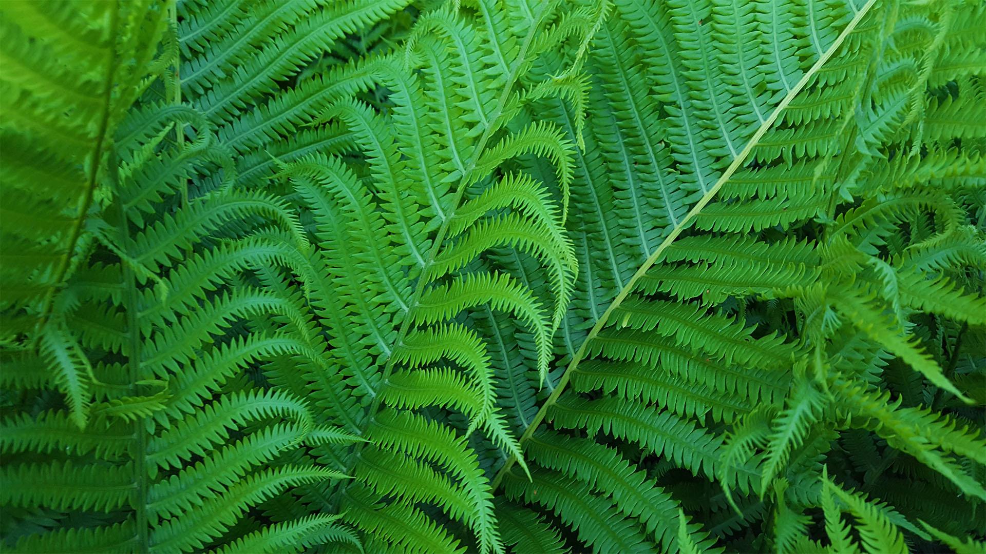 0049 green fern feature.jpg
