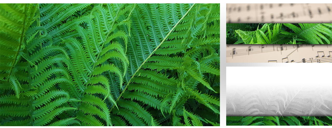 Graphic Set 0049  green fern