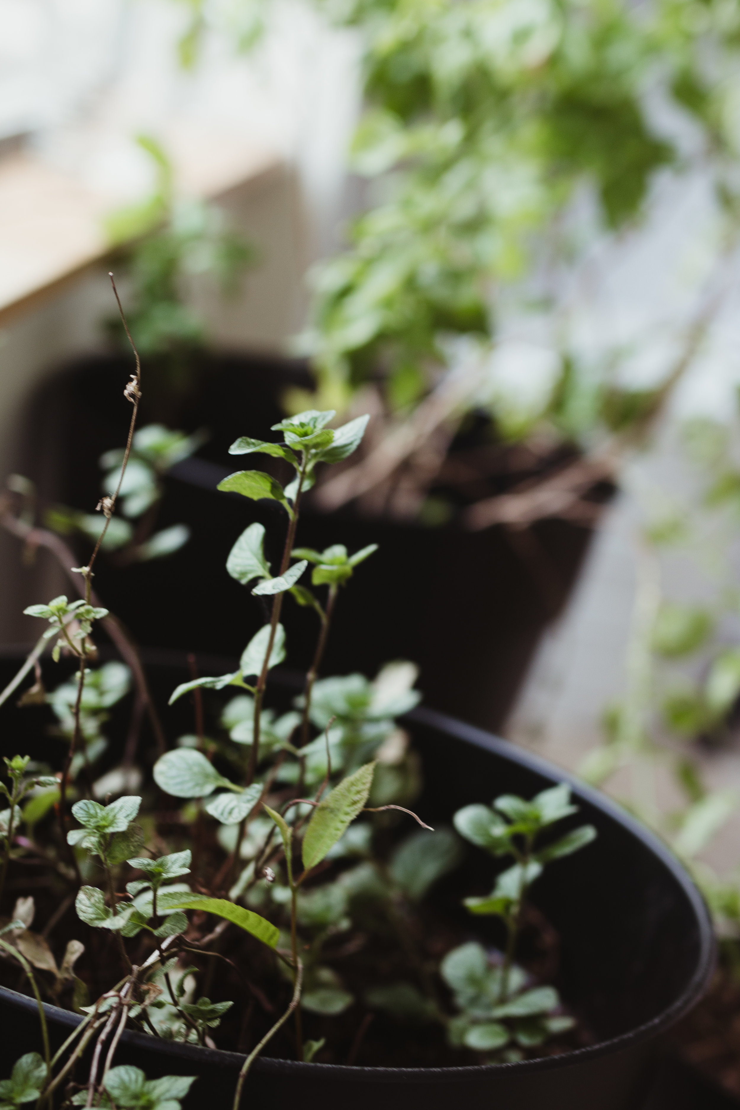 plant-12.jpg