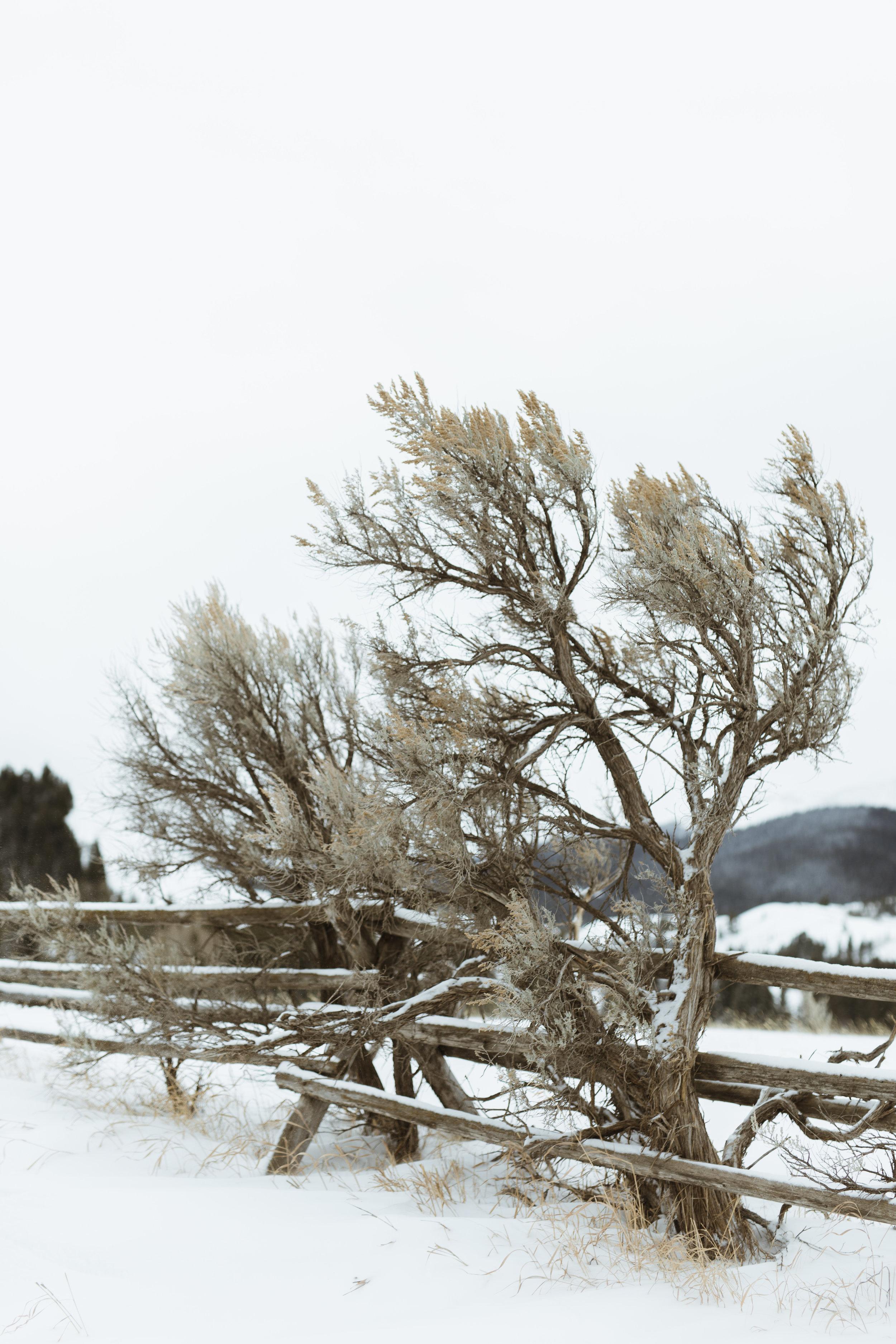 landscapes-56.jpg