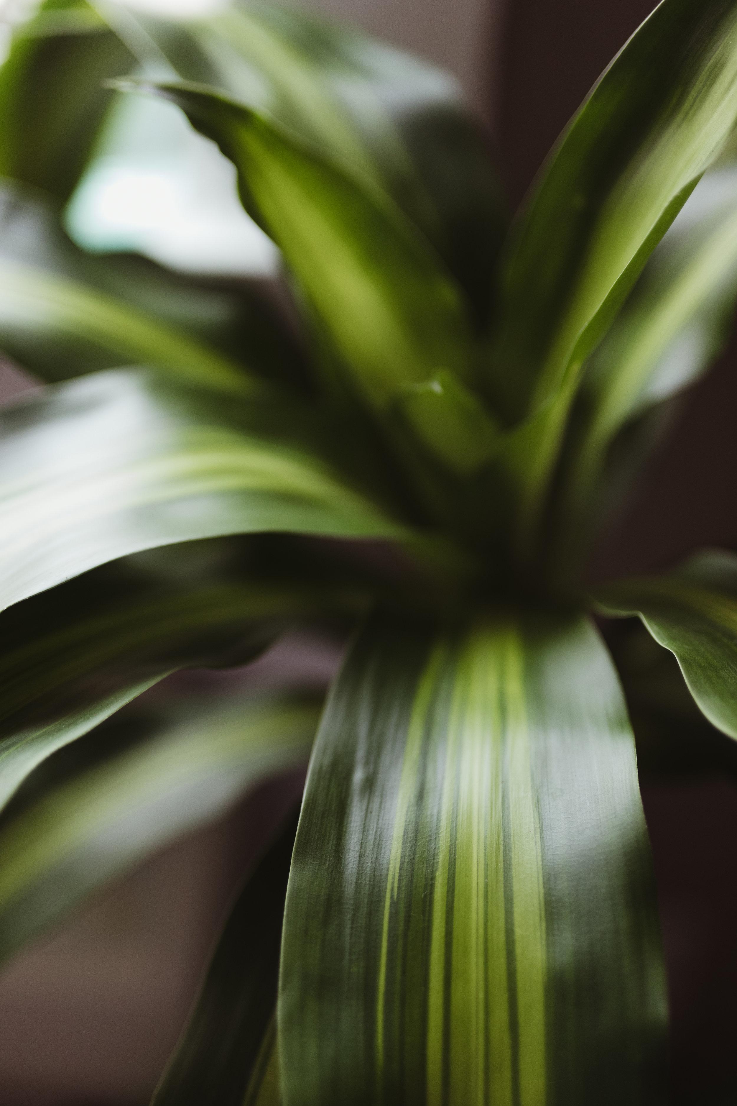 personal plants-1.JPG