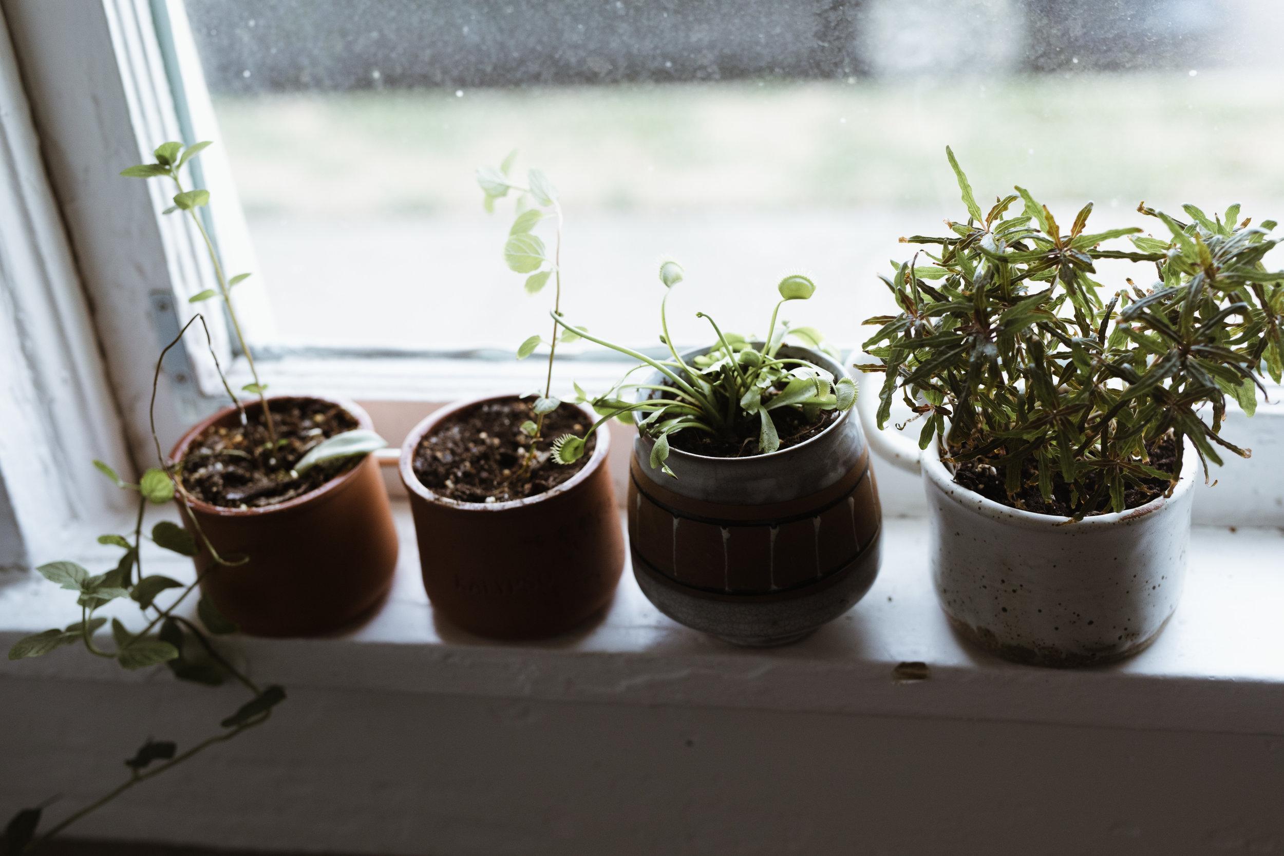 plants in home-6-2.JPG