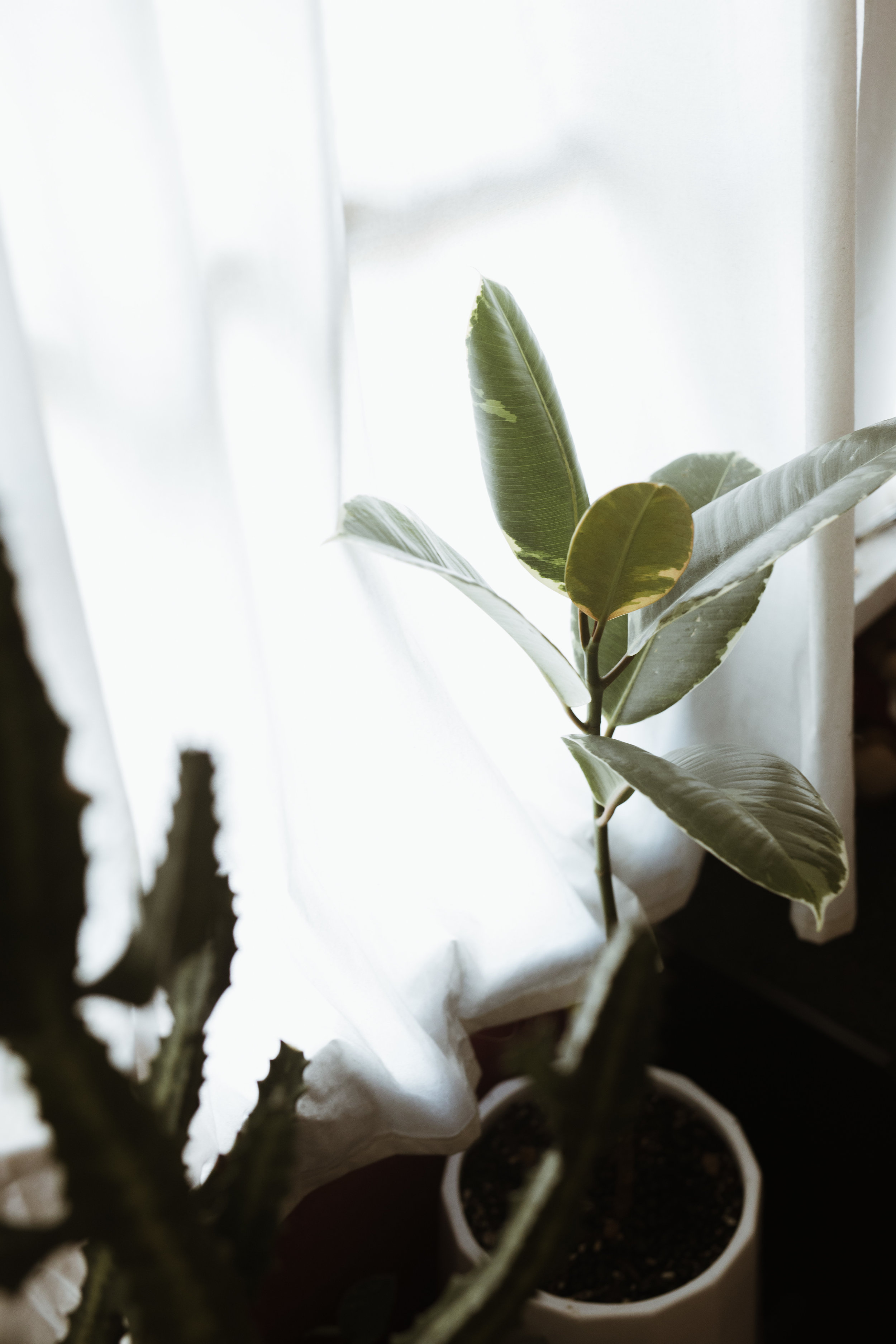 plants in home-19.JPG